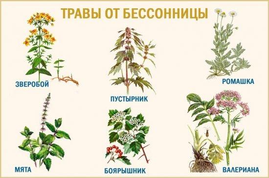 Травы от бессонницы